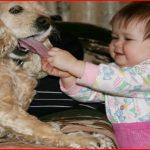 Funny baby pet videos