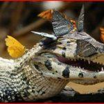 crocodile with butterflies